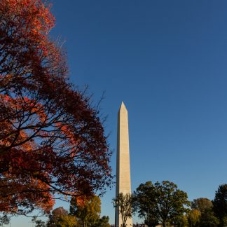 Washington Monument with bright red tree in foreground
