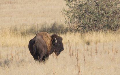 Departing Buffalo, Looking Back