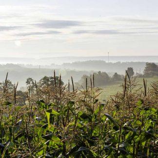 Western Maryland, foggy sunrise