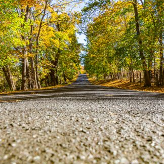 Tree lined road in Howard County, MD