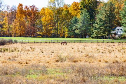 Horse on MD country farm in Autumn