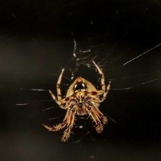 Macro of a spider spinning web