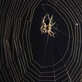 Spider on a circular web