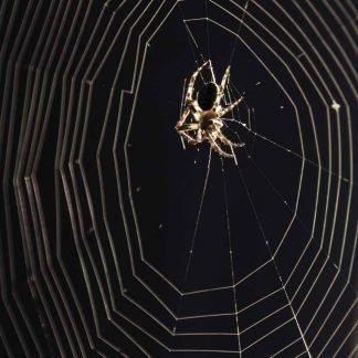 Spider on a circular web
