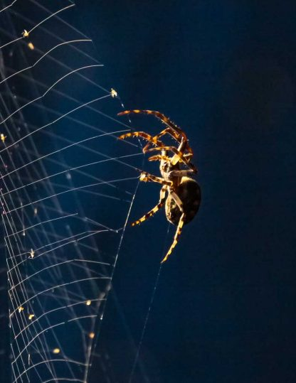 Spider on a web, close-up