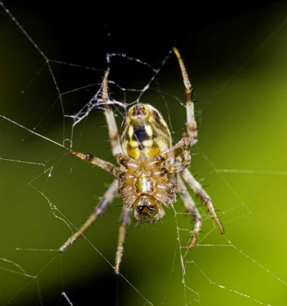 Macro of a spider